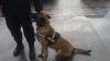 Nu i-a mers! DESCOPERIREA făcută de câinele poliţist Omu în autoturismul unui moldovean