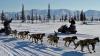 Cursă cu sănii trase de câini în Alaska. 1.600 de kilometri în condiţii meteo adverse