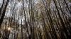 MAGIA NATURII! Fenomenul extraordinar care are loc în fiecare an în mijlocul unei păduri (FOTO)