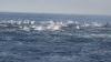SPECTACOL IMPRESIONAT, surprins în largul coastei Dana Point (VIDEO)