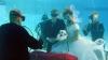 SPECTACULOS! Un scafandru profesionist va organiza NUNŢI SUBACVATICE într-un lac artificial