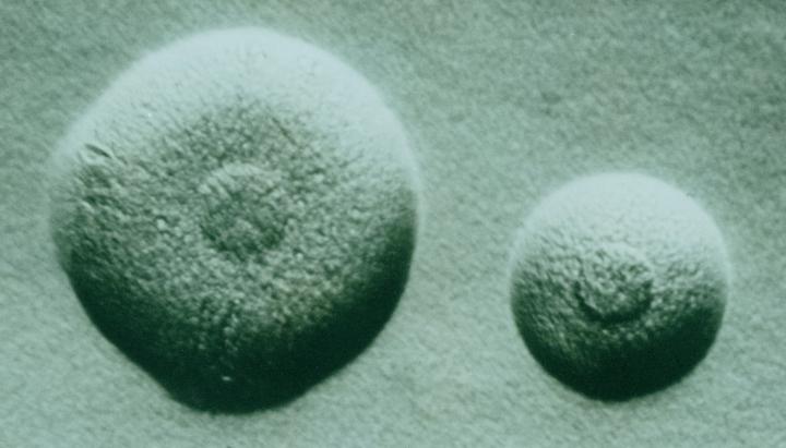 """A fost creat cel mai mic genom al unui organism. """"Ne va oferi o mai bună înțelegere a vieții"""""""