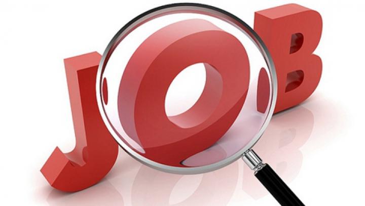 Jobul care ar putea să fie pe placul multora! Trebuie să faci ASTA pentru un salariu de 12.000 de dolari