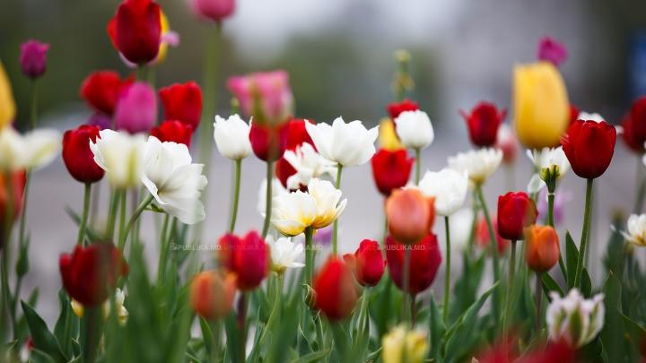 Cea mai mare grădină cu flori naturale din Europa și-a deschis porțile pentru public (VIDEO)