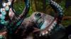 Au descoperit acvariul pustiu. O caracatiță a reușit să evadeze în Pacific