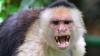 A rămas șocat. Ce i-a făcut o maimuță unui bărbat (VIDEO VIRAL)