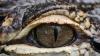 Un aligator URIAȘ a fost ucis în Florida. Imaginea cu reptila a devenit VIRALĂ PE INTERNET (FOTO)