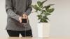 Florile, BUNE la încărcat telefoane mobile (VIDEO)