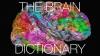 """""""Dicționar cerebral""""! Aplicaţia care îți arată unde sunt stocate toate cuvintele pe care le cunoști (VIDEO)"""
