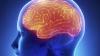 STUDIU: Cum să-ţi foloseşti la maximum creierul în funcţie de anotimp