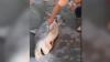 Au găsit un rechin mort pe plajă și i-au tăiat burta. Ce se afla înăuntru i-a lăsat mască (VIDEO VIRAL)