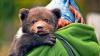 Un ursuleţ norocos a fost salvat de pompieri dintr-un incendiu din Florida (VIDEO)