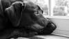 DEVOTAMENT! Un câine stă de cinci ani în același loc, aşteptându-și stăpânul care a murit (VIDEO)