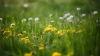 METEO 17 aprilie 2016. Vreme îmbietoare la iarbă verde în ultima zi de weekend