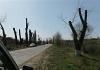 Ce crezi că o să iasă din acești copaci. Un bărbat a surprins un peisaj dezolant la Ghidighici (FOTO)