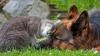 Amicul pe care te poţi baza! Pisica neînfricată care îşi apară prietenul câine (VIDEO)