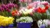 Cinci boli care te pot afecta primăvara. Recomandări utile pentru a le preveni