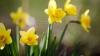 METEO 23 aprilie: Vremea se menţine caldă. Câte grade vom avea în termometre