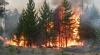 Mii de hectare de păduri din nord-estul Rusiei au fost MISTUITE de INCENDII