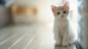 VEI RÂDE CU LACRIMI! Ce face o pisică atunci când îi este foame (VIDEO)