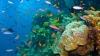 Savanţii consideră că MEDICAMENTELE VIITORULUI s-ar putea afla la fundul oceanelor (VIDEO)