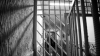 30 de zile de arest pentru bărbatul care AR FI ARUNCAT GRENADA în casa lui Dorin Drăguţanu