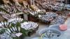 Ortodocşii postitori au făcut cozi la tarabele cu peşte. Comercianţii AU MAJORAT preţurile