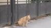 Un nou scandal la Bălţi! Pisicile maidaneze au scos oamenii în stradă (VIDEO)