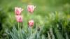 La Cimişlia ar putea fi deschisă prima Grădină Botanică din provincie