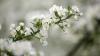 Obiceiuri şi tradiţii de Florii: Fetele află prin diferite metode dacă se vor căsători în acest an