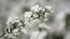 Vremea face ravagii în nordul țării. Înghețurile au adus fermierilor PIERDERI DE MILIOANE DE LEI