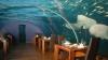 Top 5 a celor mai ciudate restaurante din Europa (VIDEO)