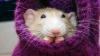 Nu o să-ți vină să crezi! O echipă de șoareci pleacă în spaţiu cu o misiune specială (VIDEO)
