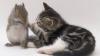 O pisică numită Belka a adoptat două veverițe (VIDEO)