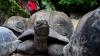 INCREDIBIL! A ascuns 51 de broaște țestoase în pantaloni. Ce s-a întâmplat după