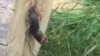A tras sperietura vieții după ce a tăiat un pom. Vezi ce creatură a ieșit din centrul trunchiului (VIDEO)