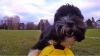A cucerit Internetul. Câinele care face cascadorii nemaipomenite cu mingea de fotbal (VIDEO)