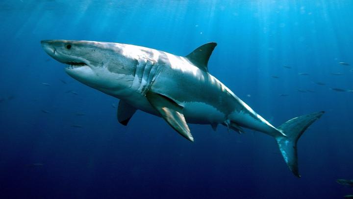 NU I-A FOST FRICĂ! Un bărbat din SUA a salvat un rechin de la moarte