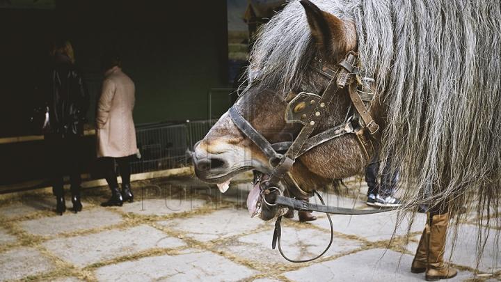 CULMEA VITEZEI! Un radar a surprins doi cai care păşteau cu 104 km/h. CE S-A ÎNTÂMPLAT