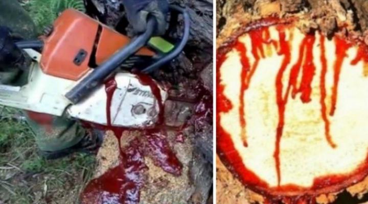 """Copacii care """"sângerează"""". Imaginile au stârnit uimire printre internauți (FOTO)"""