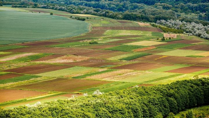 PIERDERI DE MILIOANE! Agricultorii se plâng că nu au cu ce îşi uda culturile şi livezile