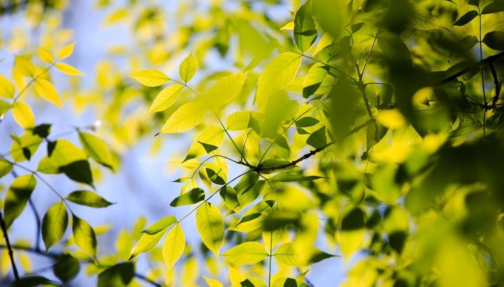 Util! Planta miraculoasă care vindecă 100 de boli și previne cancerul