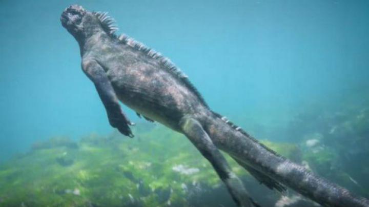 TEROAREA din adâncuri. Monstrul descoperit în largul coastelor Insulelor Galapagos (VIDEO)
