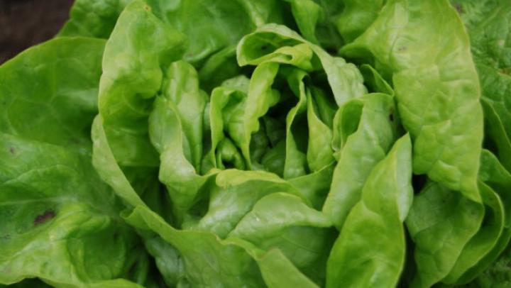 Vrei ca salata verde să reziste mai mult în frigider? TRUCUL la care trebuie să apelezi