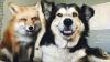 Fac FURORI pe Internet! Vezi cât de drăgălașă arată prietenia dintre un câine și o vulpe (FOTO/VIDEO)
