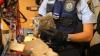 SCANDAL EXPLOZIV la vârful poliţiei franceze: luptătorii antidrog au organizat trafic de canabis