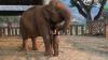 Cântecul de leagăn care poate adormi un elefant (VIDEO)