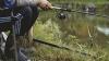 Pescuitul poate fi PERICULOS! Cum un vultur i-a furat captura unui pescar (VIDEO)