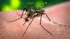 ALERTĂ: Virusul Zika ar putea ajunge la Marea Neagră în această vară