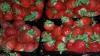 Un robot poate culege rapid căpșuni. Acesta strânge de pe șase rânduri odată